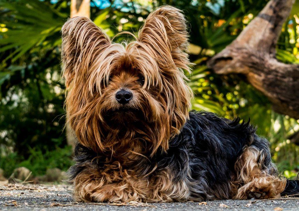 Les lois imposées sur les animaux de compagnie